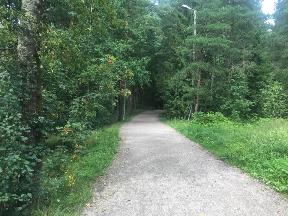 FinnishForest